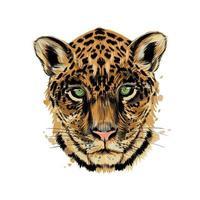 Jaguar, leopard head portrait from a splash of watercolor, colored drawing, realistic. Vector illustration of paints
