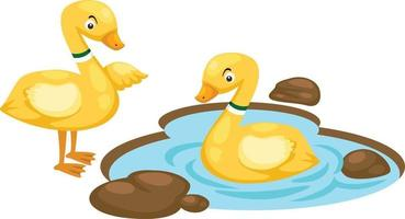 Illustration of isolated duck family on white background vector