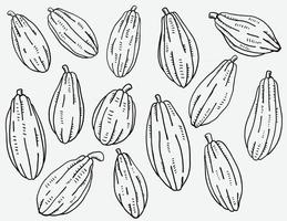 Doodle freehand sketch drawing of cacao fruit collection. vector