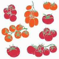 Doodle freehand sketch drawing of tomato vegetable. vector