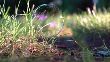 Fragile soap bubble on grass with morning lights video