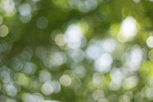 Bokeh, the beauty of the blur caused by green trees background photo
