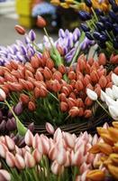 tulipanes en un mercado foto