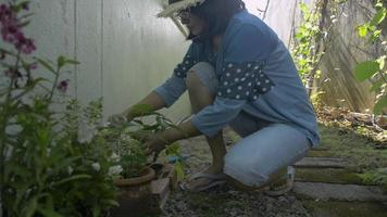 Asian woman wearing straw hat caring and shoveling the soil for potted plants at home. Houseplant. Gardening. Hobbies and Leisure activities. video