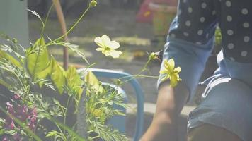 Close up asian woman is filling the soil into flower pot during caring home garden under morning sunlight. Houseplant. Gardening. Hobbies and Leisure activities. video