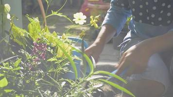 Asian woman caring and shoveling the soil for potted plants in home garden under morning sunlight. Houseplant. Gardening. Hobbies and Leisure activities. video