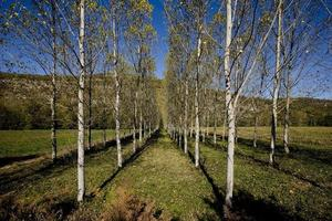 Callejón de árboles en las montañas de Lot, Francia foto