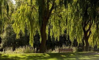 A natural park populated by weeping willows in the town of Garray, province of Soria, Castilla y Leon, Spain photo