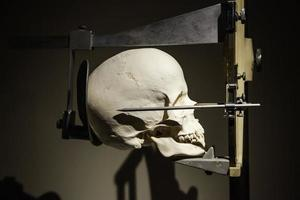 cráneo médico para estudios foto