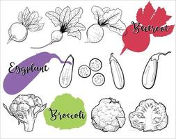 Line drawings of organic vegetables are healthy food. vector