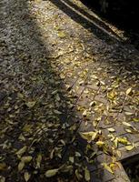 Dead leaves on the ground photo