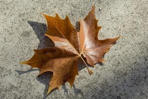 Autumn leaves on the ground photo