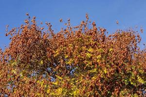 Trees in the colors of autumn photo