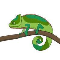 un camaleón verde se mueve a lo largo de una rama de un árbol o planta vector
