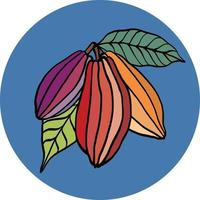 Cacao pod freehand drawing on colorful background. vector