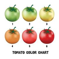 Collection of a developing tomato chart from green to red. vector