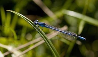 libélula en una hoja vegetal foto
