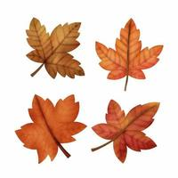 Watercolor Autumn maple leaves vector