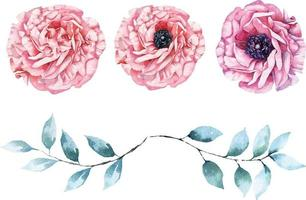poppy painted watercolors vector