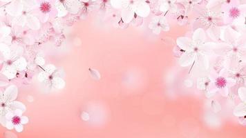 Blossoming light pink sakura flowers Realistic cherry flowers vector