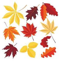 Vector set of autumn leaves isolated on a white background