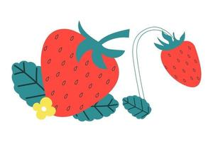 Strawberry with leaves. Summer concept. vector