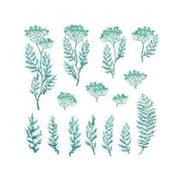 Vector colorful illustration set of herbs, plants and flowers