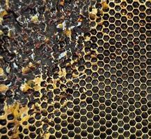 Drop of bee honey drip from hexagonal honeycombs photo