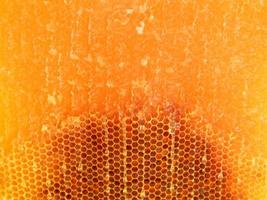 Background hexagon texture, wax honeycomb from a bee hive photo