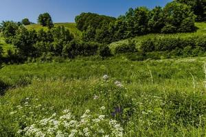 Hills and spring flowers photo