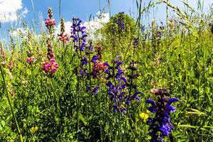 Wildflowers and grass photo