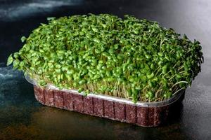 caja con brotes frescos de micro hojas de rábano para agregar alimentos saludables a los platos foto
