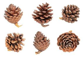 Pine cones isolated on white bacckground. photo