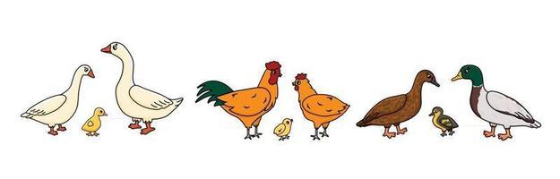 Set of Vector outline doodle cartoon Duck, goose, cock families