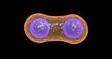 división celular sobre fondo negro video