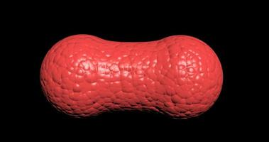 división celular roja de un feto in vitro bajo el microscopio, división celular genérica, división de células madre. video