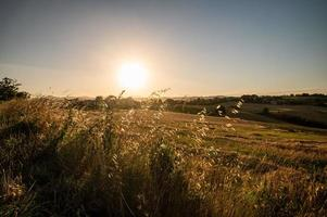 Grass at sunset in the summer photo