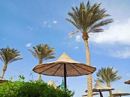 Straw umbrella and high palm trees in Hurghada, Egypt photo