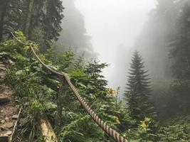 Beautiful forest of Caucasus mountains in fog. Russia photo