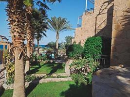 Hermoso jardín verde con palmeras y arbustos rizados en la ciudad de Hurghada, Egipto foto
