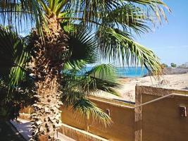 Hermosa palmera verde en Hurghada, Egipto foto