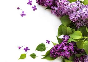 Lilac in flat style on white background. Beautiful spring. Overhead view. Flat lay, top. Summer season. Natural spring style. photo