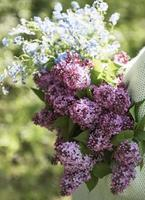 Bouquet of lilacs in woman hands photo