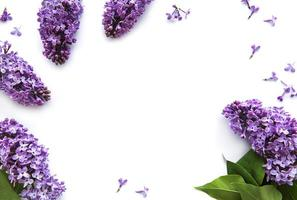 Lilac flowers on a white background photo