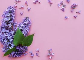 flores lilas sobre un fondo rosa foto