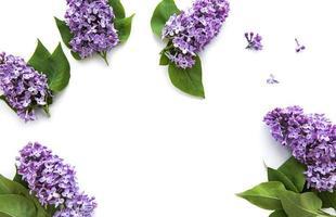 flores lilas sobre un fondo blanco foto