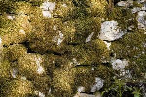 musgo en las piedras, provincia de lot, francia foto