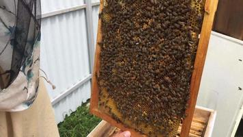 Bee Hive Filled with Honey video