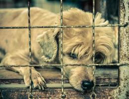 Lonely old dog in cage photo