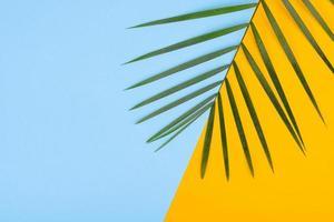 hojas de una planta verde sobre un fondo de color con un lugar para el texto foto